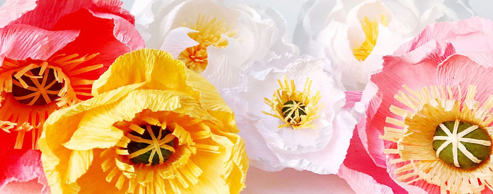 2017-05_bouquet_header_narrow_1600-1